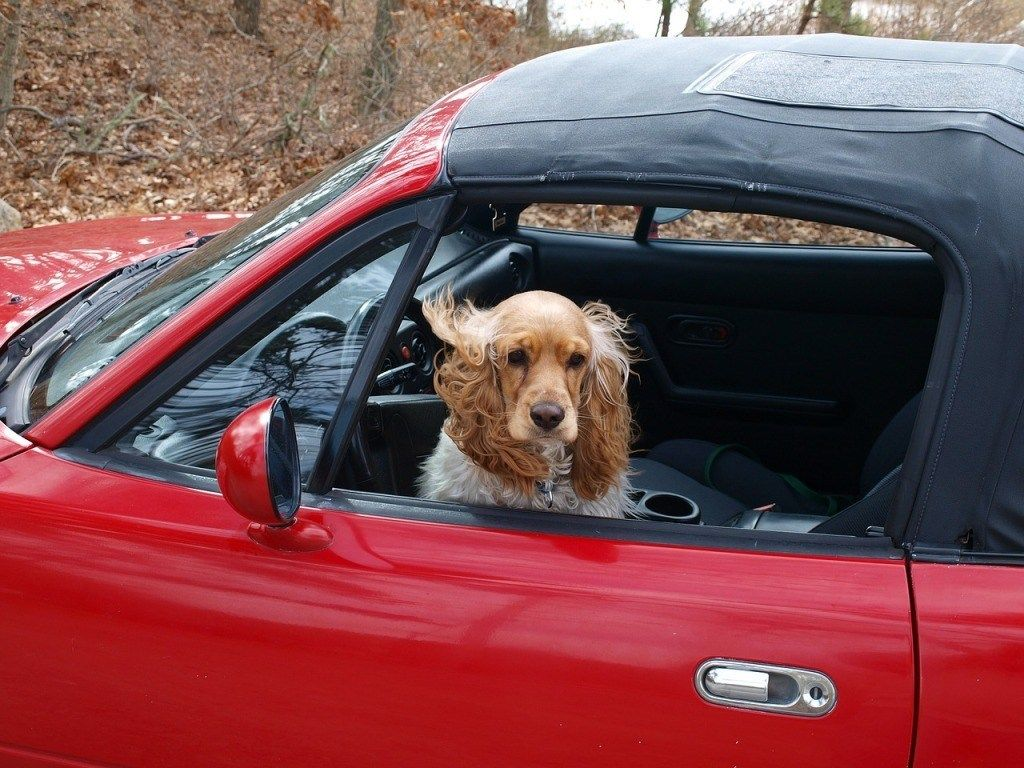 In A Welcome Victory For Animal Welfare In New York Governor Andrew Cuomo Has Signed New Legislation To Enable Firefighters Dog Car Safety Dog Travel Dog Car