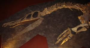 No, Dinosaurs Weren't Zapped by UFOs...and Other Myths About the K/T Extinction: Myth - Dinosaurs Died Quickly, and All at the Same Time