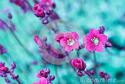 Flores hermosas de la primavera en tono abstracto del color