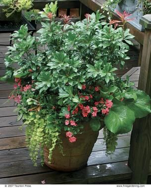 10 Plants For Year Round Containers Fine Gardening3