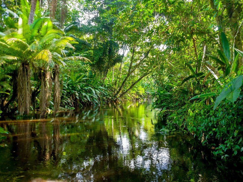 EdExcel A GCSE Geography 19 Ecosystems, Biodiversity