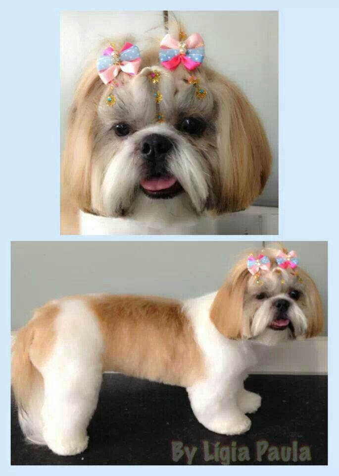 Shih Tzu Dog Grooming My Passion Pinterest Shih Tzu Dog