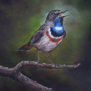 Vogels - Ton Nederhoff
