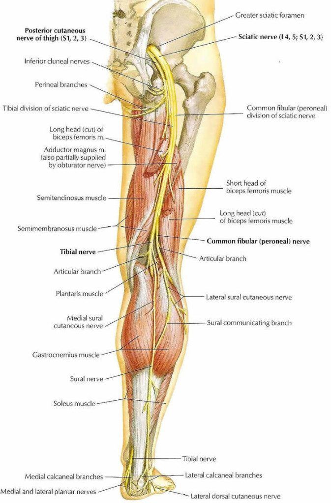 Sciatica, What It Is and How to Reduce Pain