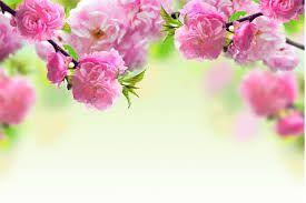 Resultado de imagen para flores hermosas para fondo de pantalla