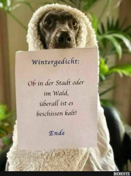 Wintergedicht.. | Lustige Bilder, Sprüche, Witze, echt lustig | 2
