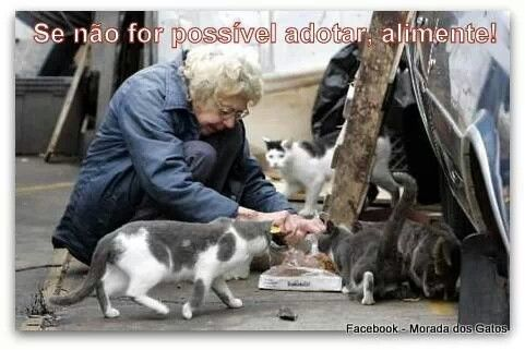 If you can not adopt, help them! ¤ Lovely Cats