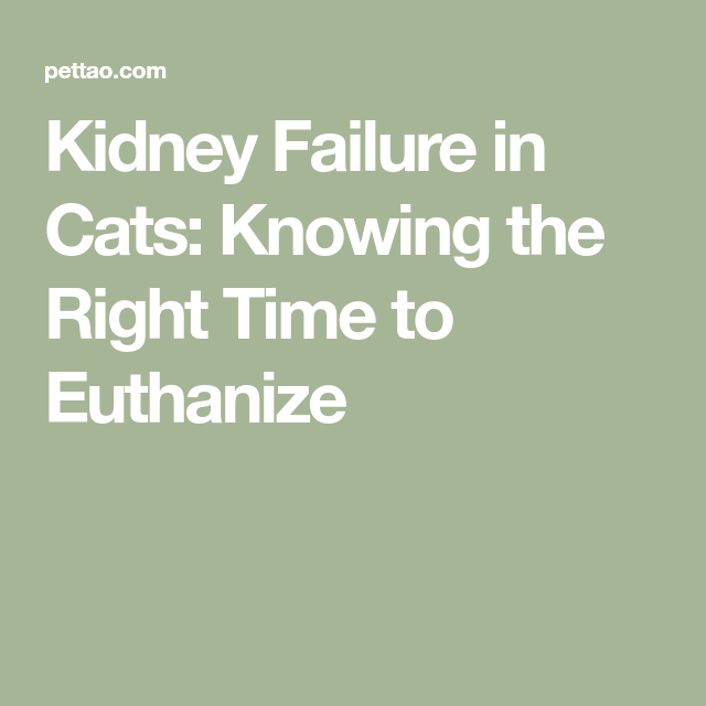 Kidney Failure In Cats Knowing The Right Time To Euthanize Kidney Failure Liver Failure Cat Kidney