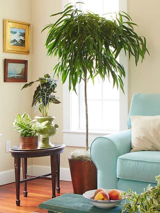 Indoor trees that spruce up any space indoor trees low for Low maintenance indoor flowers