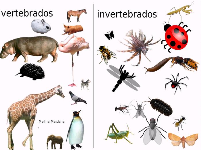 Dibujos Para Colorear De Animales Invertebrados Y Vertebrados: Animales Invertebrados, Vertebrados