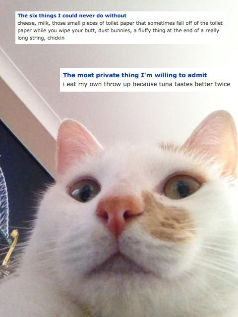 The Creepiest Cats You Meet On OkCupid Creepy Cat And Creepy - 17 funniest animal selfies
