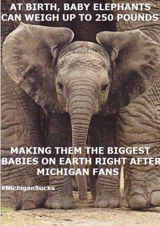 Sparty on! | Sparty on! | Pinterest | Buckeyes, Ohio and Ohio state ...