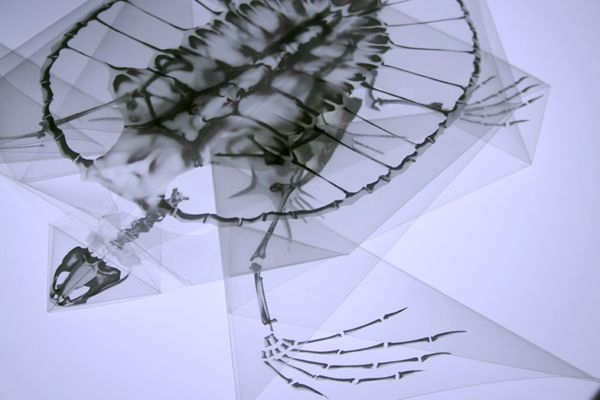 Oritsunagumono: X-Ray Origami | CreArt | Pinterest
