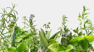 Το ήξερες; Ποιο είναι το βότανο που ΠΡΟΣΤΑΤΕΥΕΙ από καρκίνο και διαβήτη;