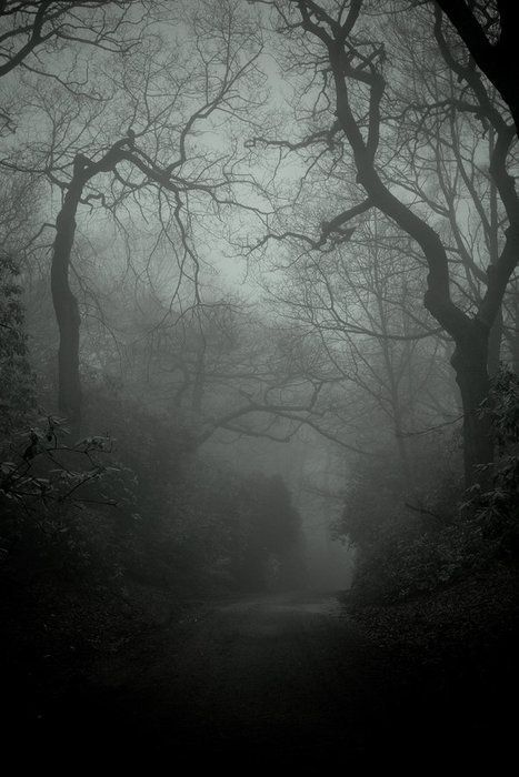 Creepy One Writing Inspirations Bosque Tenebroso Bosque