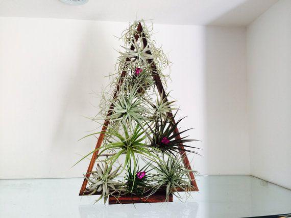 Tropical Tabletop Tillandsia Airplant Christmas Tree Kit Tropical Tabletop Christmas Tree Kit Air Plants