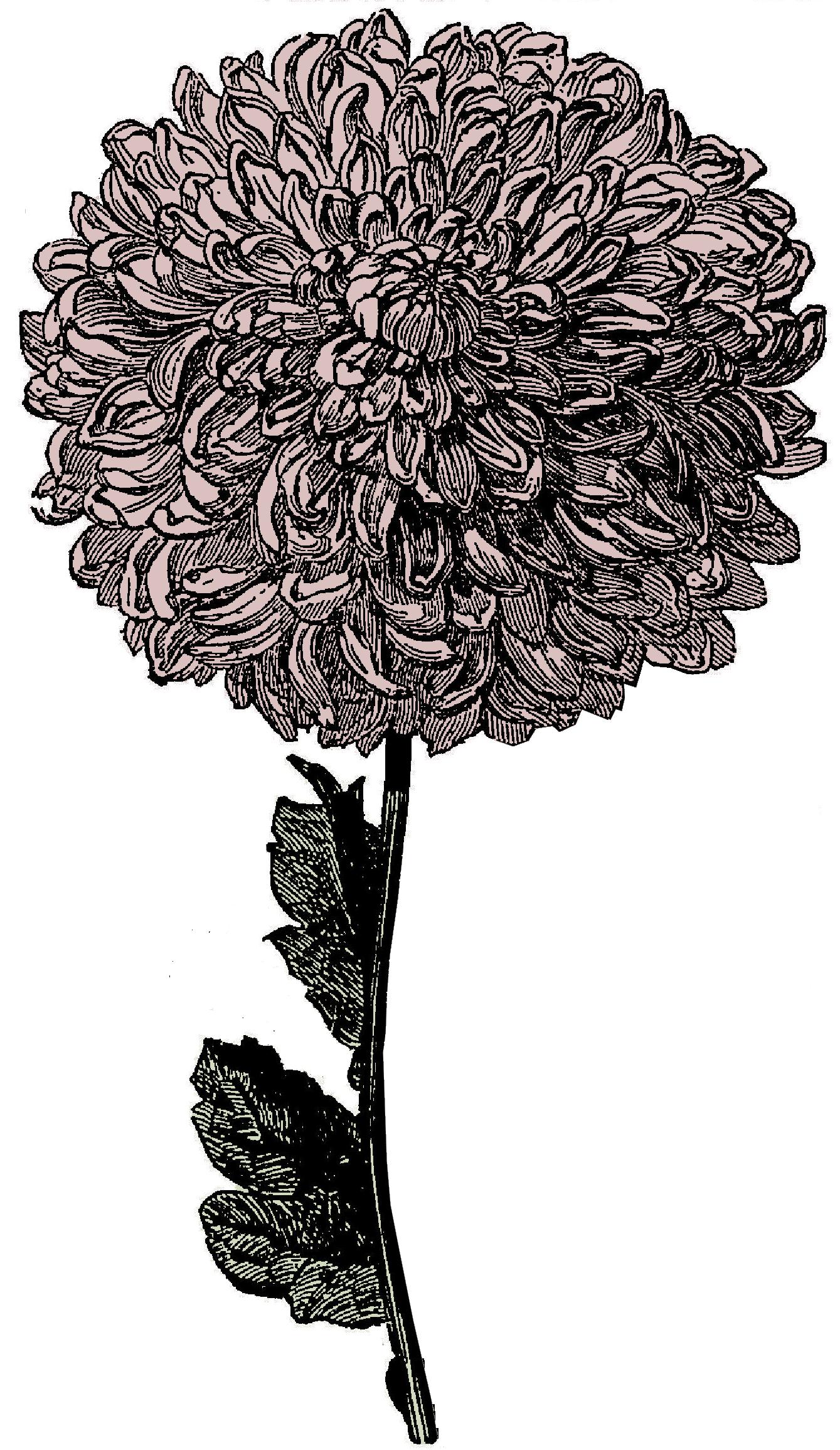 deliahhhh Clip art, Flower clipart, Free vintage printables