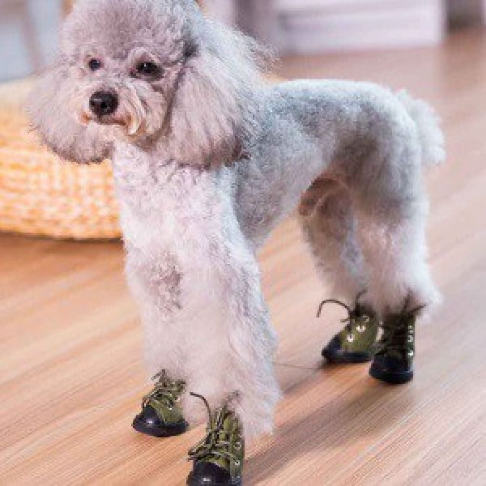 Best Dog Boots To Buy How To Protect Your Dog S Paws Throughout