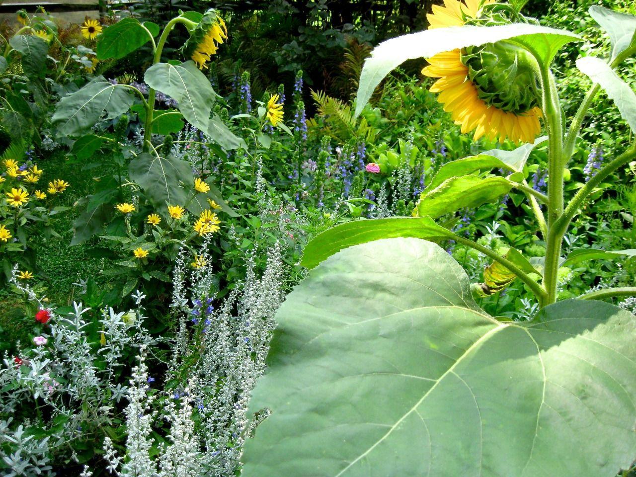 geopsych Garden, Plants, Plant leaves