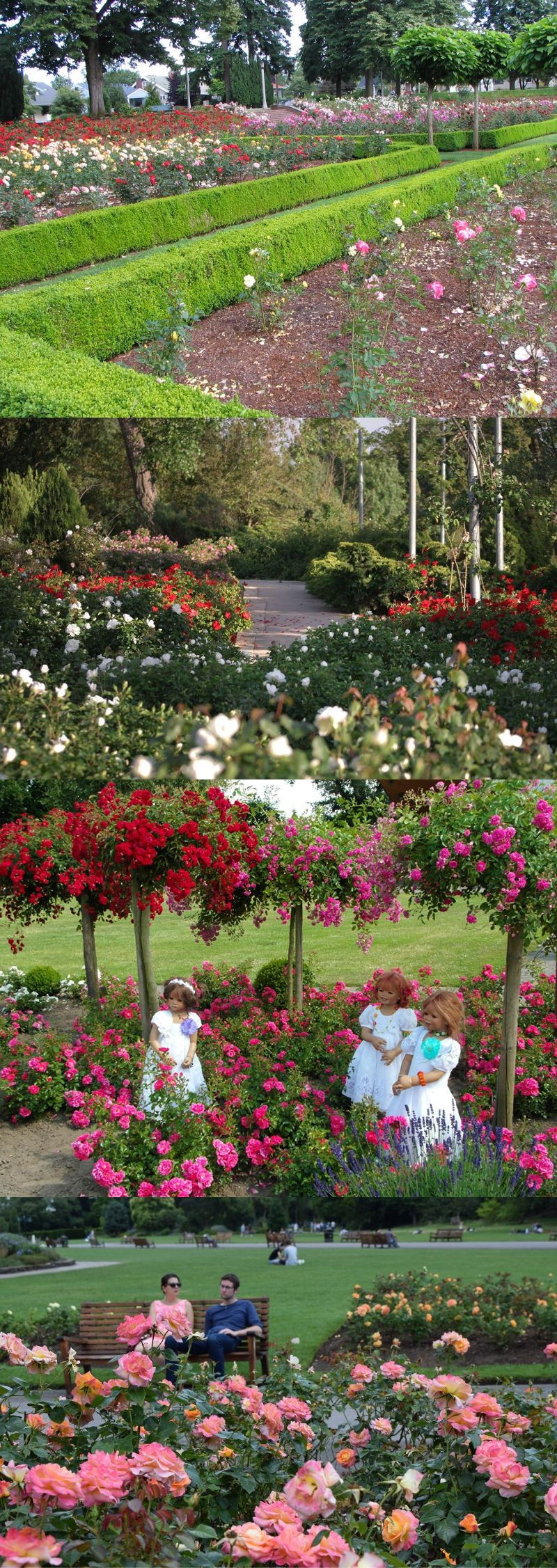 Gorgeous And Simple Rose Garden Ideas With Landscape And Fence Ideas Smallkitchengarden Rose Garden Landscape Rose Garden Simple Rose