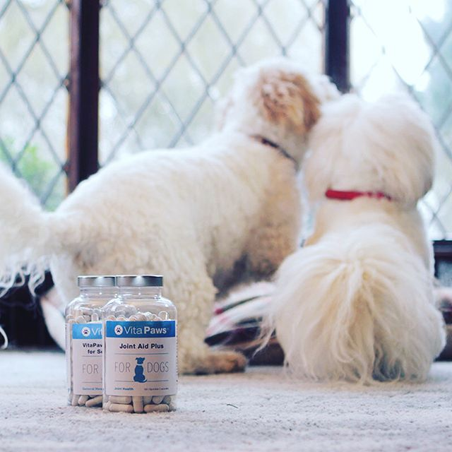 Joint Aid Plus for even the littlest legs. .  .  .  #instadog #instapuppy #doglover #adorable #hound ##dog #dogs #puppy #pup #cute #instadog #doglover #adorable #hound #s #lovedogs #dogoftheday #dogstagram #nature #instagramdogs #ilovemydog #dogsofinstagram #photooftheday #dogsitting #petsagram #petstagram #animals #animal #pet #pets #dogs_of_instagram #instagood #love #vitapaws