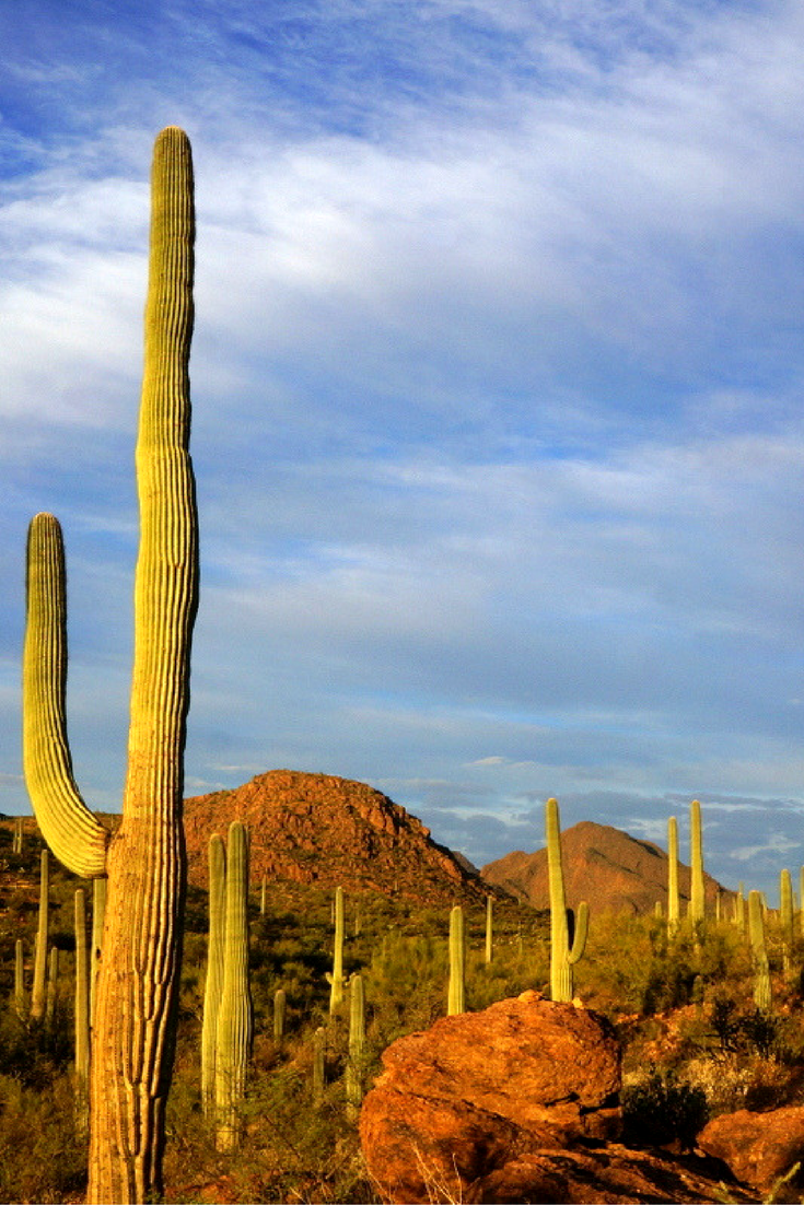Top Things To Do In Tucson For Families Tucson Arizona - 10 things to see and do in tucson