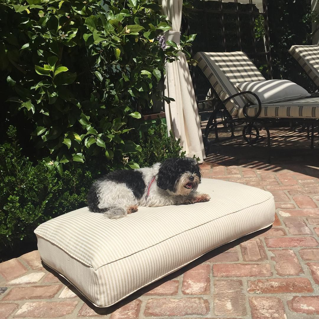 It's a dogs life! Perennials pet beds are fashionable