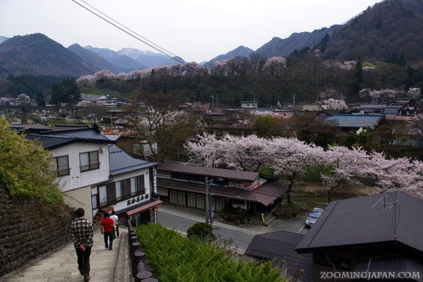 Yamadera in spring is a nice place to visit. Cherry blossoms are usually at their peak there in late April.