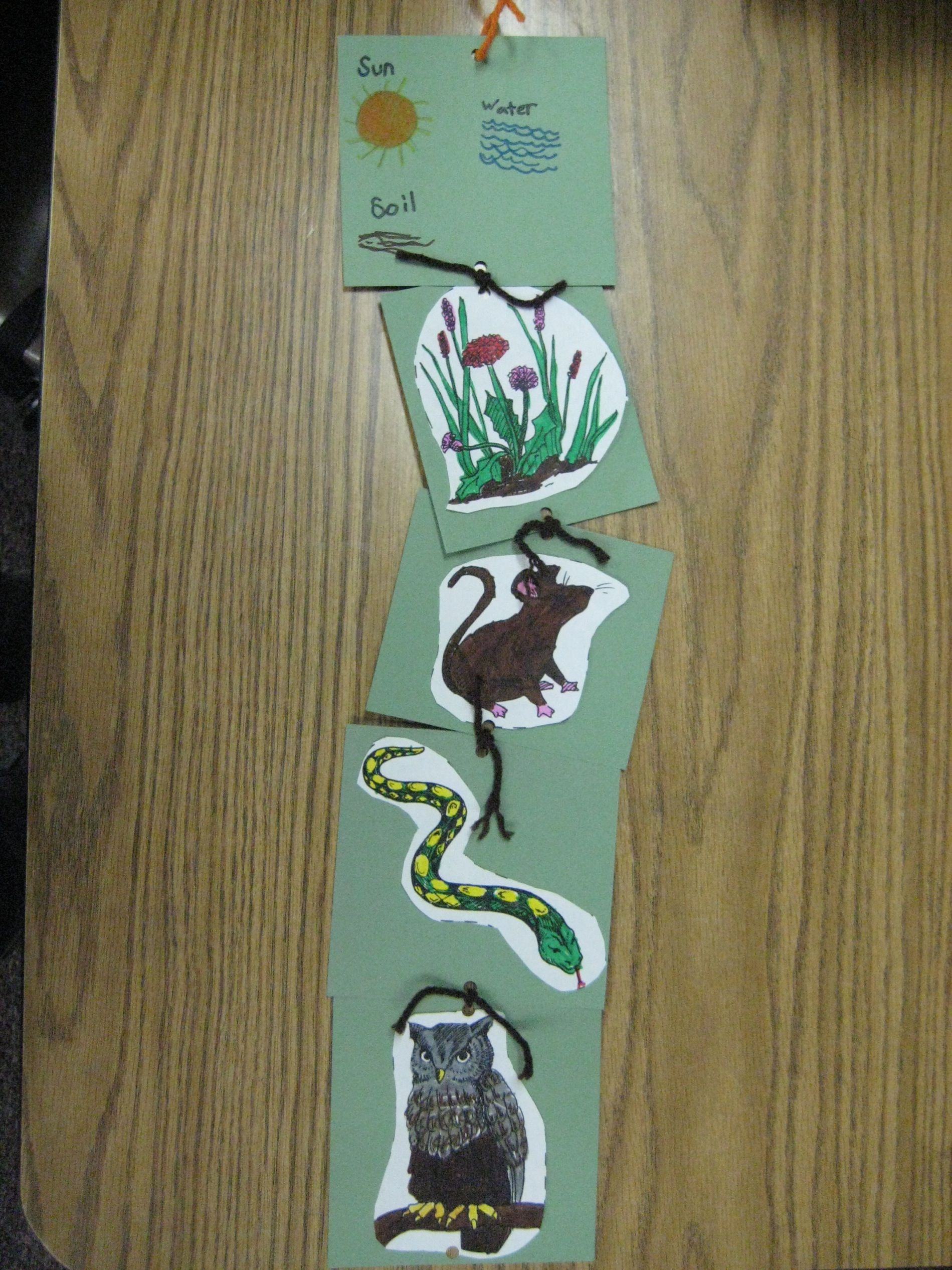 Bringing Your Classroom To Life With Life Cycles And Food Chains