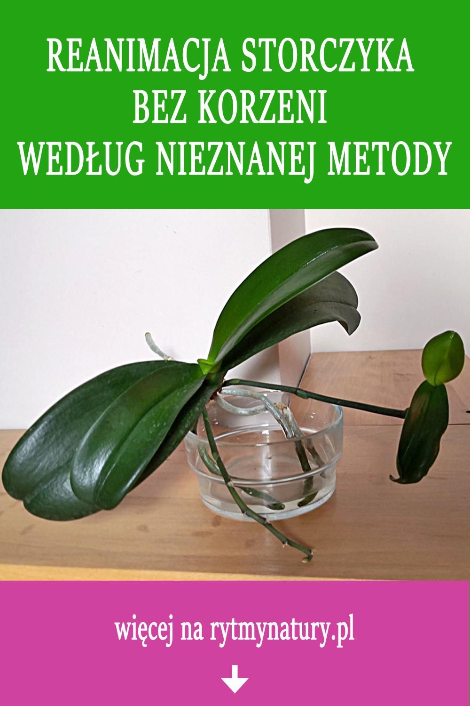 Reanimacja Storczyka Bez Korzeni Wedlug Nieznanej Metody Hanging Plants Plants House Plants