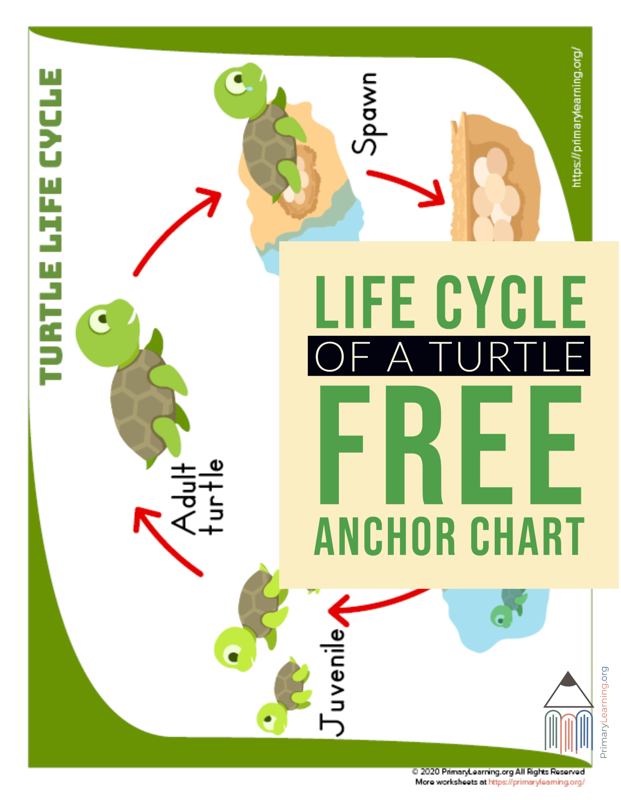 Turtle Life Cycle Anchor Chart In
