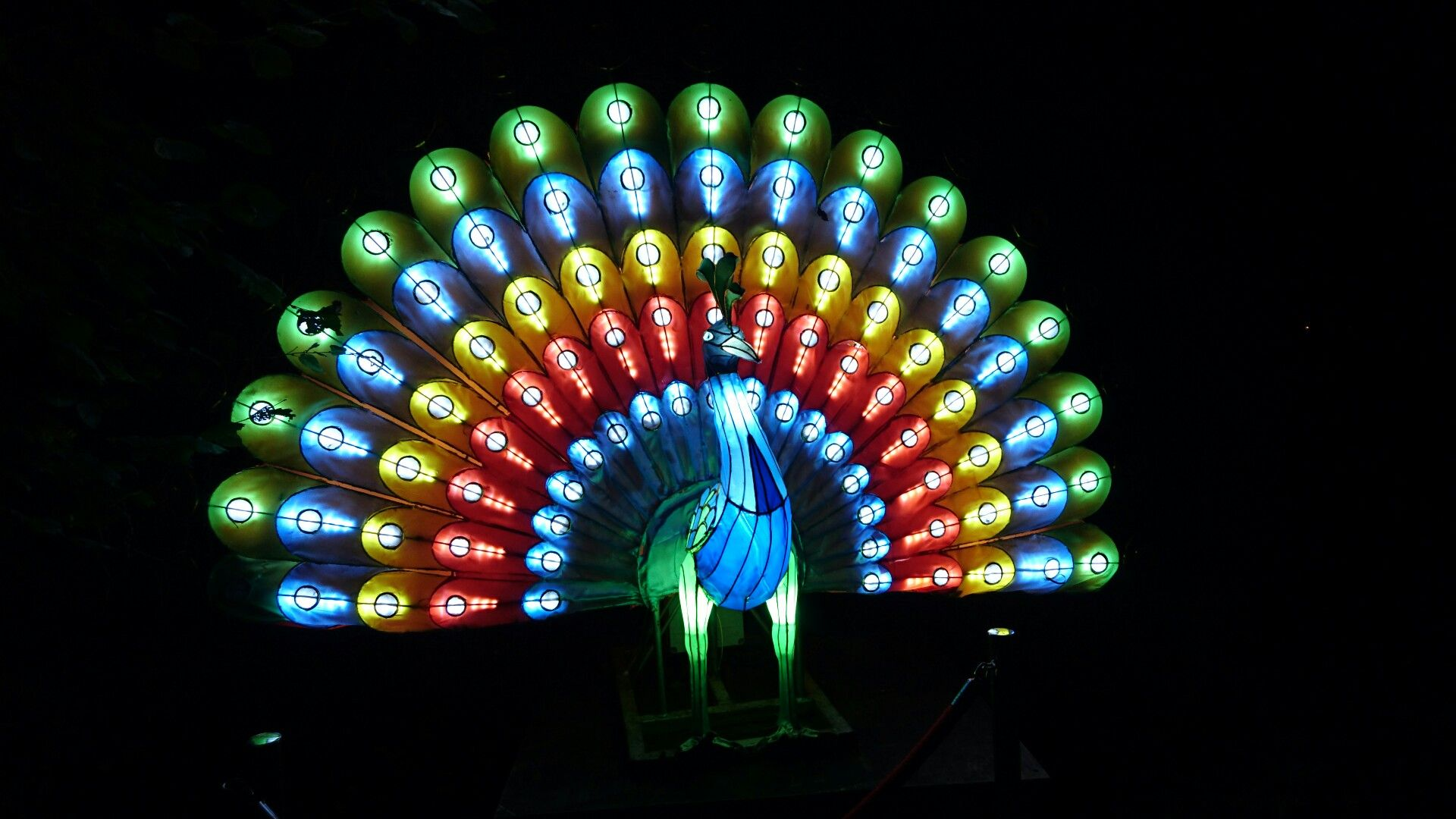Peacock, Festival of Light, Isle of Wight