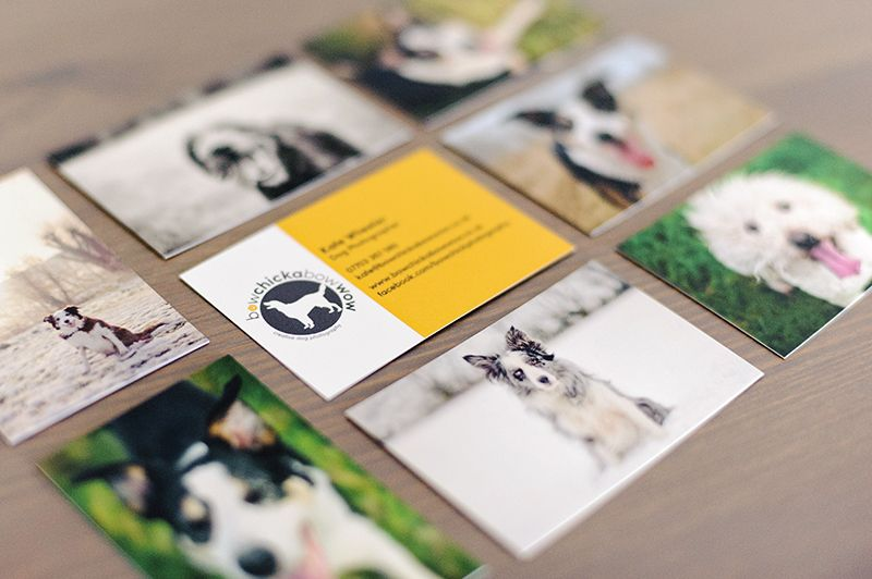 Creative pet photography by kate wheeler moo business
