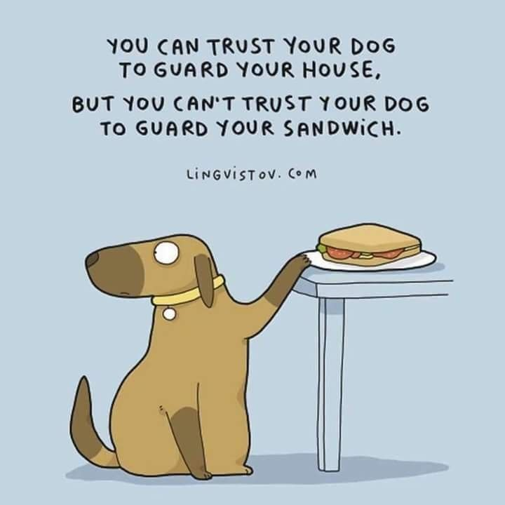 Pin by Heidi Engler on Facebook Posted Dog quotes funny