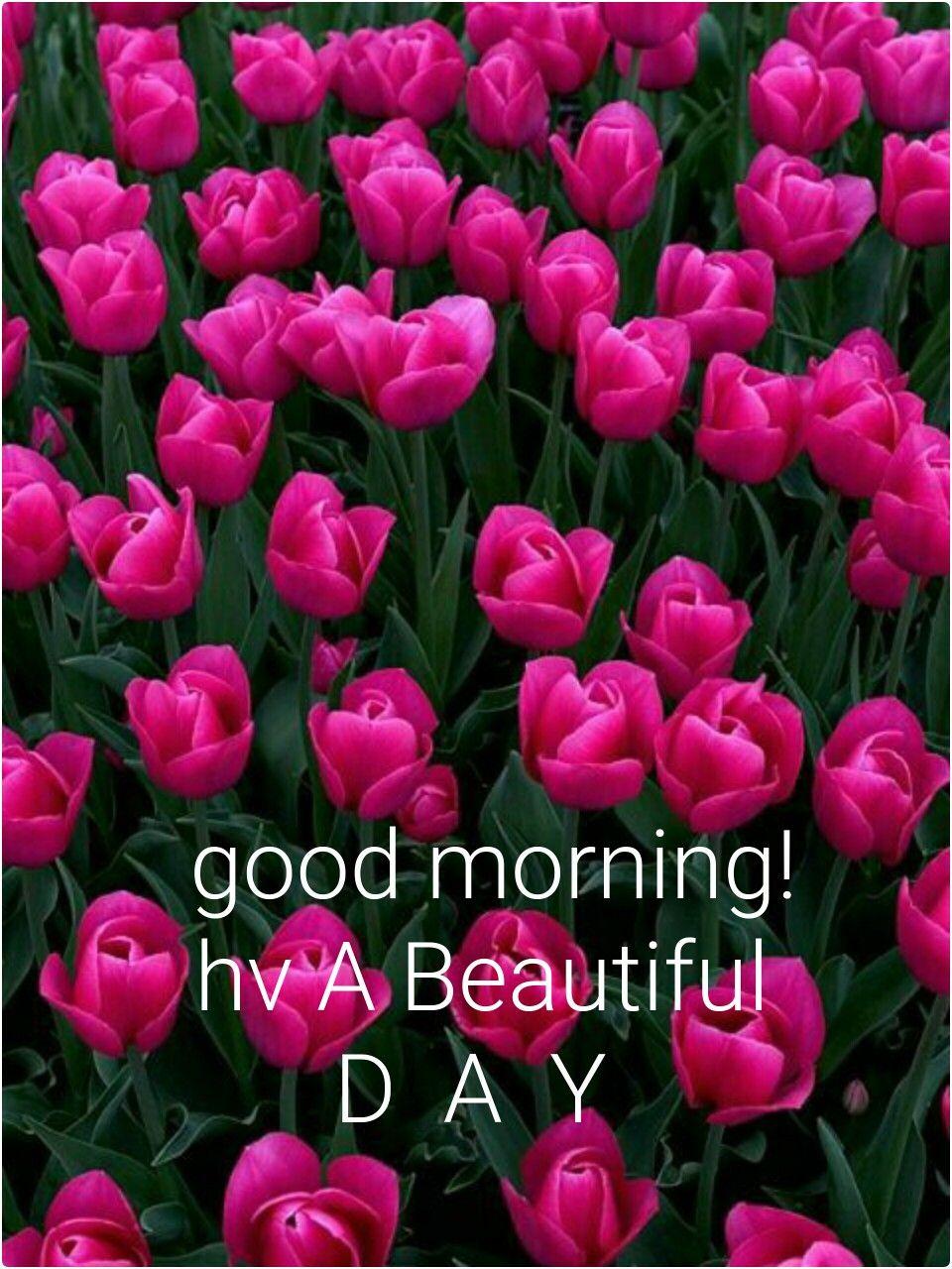 Good Morning Good Morning Good Morning Morning Greeting