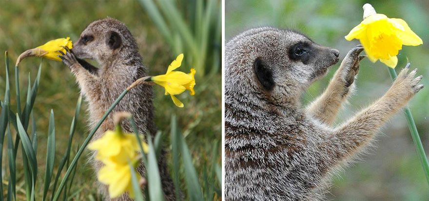 animals-smelling-flowers-47__880