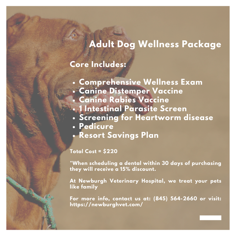 Adult Dog Wellness Package Newburgh Veterinary Hospital Dog Wellness Veterinary Hospital Veterinary