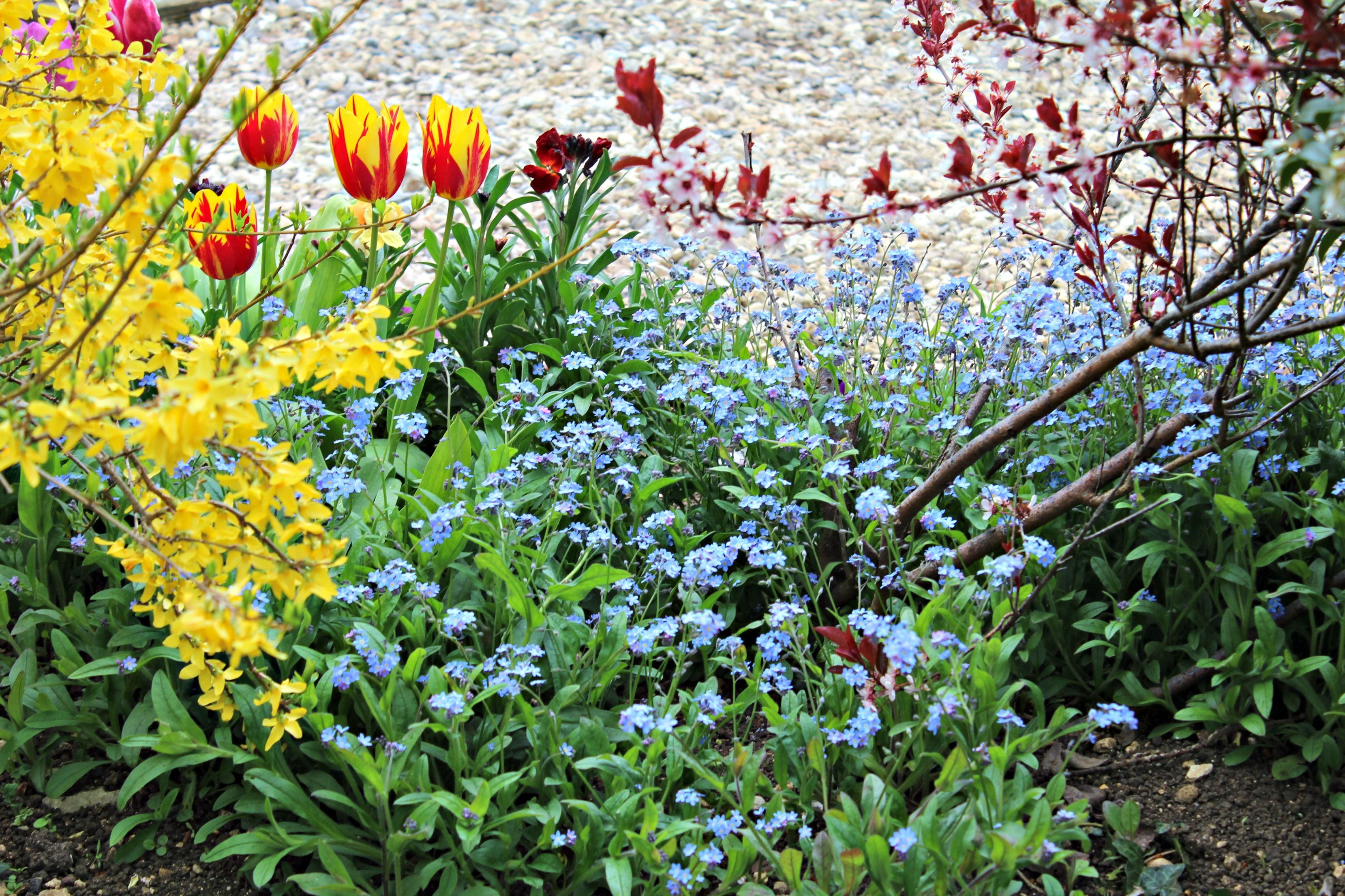 Beautiful Flower Border Full Of Colour And Joy Flowers