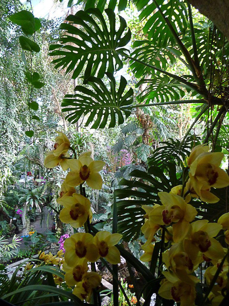 Jardin des plantes paris 5e jardins d 39 hiver - Serres jardin des plantes ...