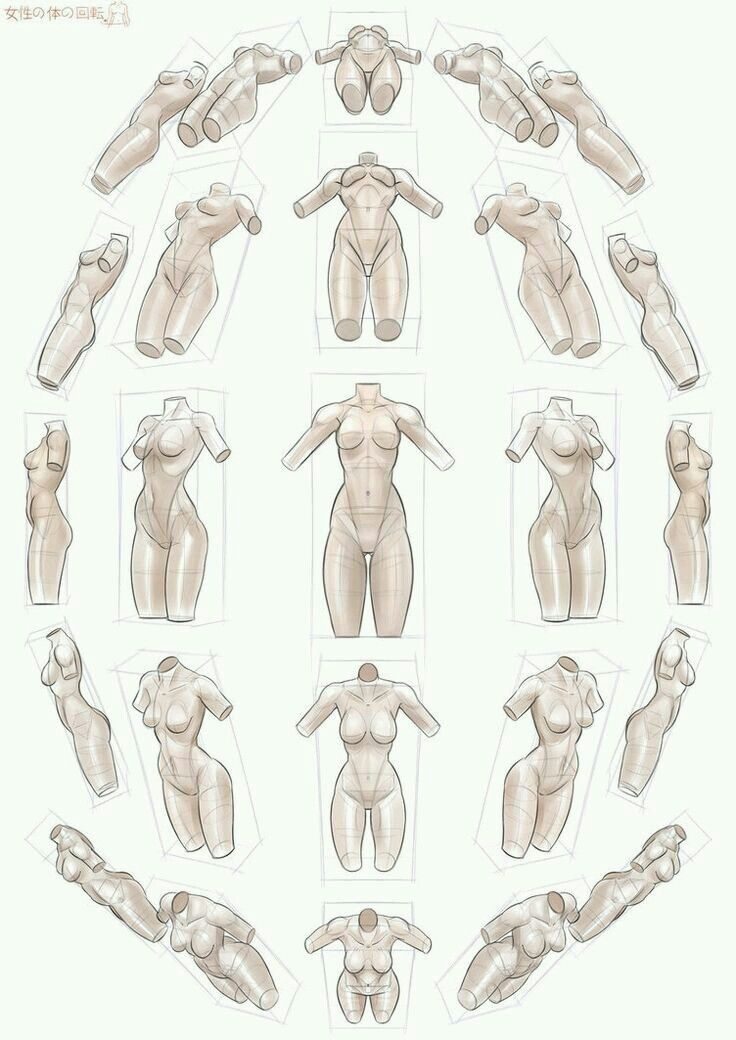 Pin de Derek en references | Pinterest | Anatomía, Dibujo y Perspectiva