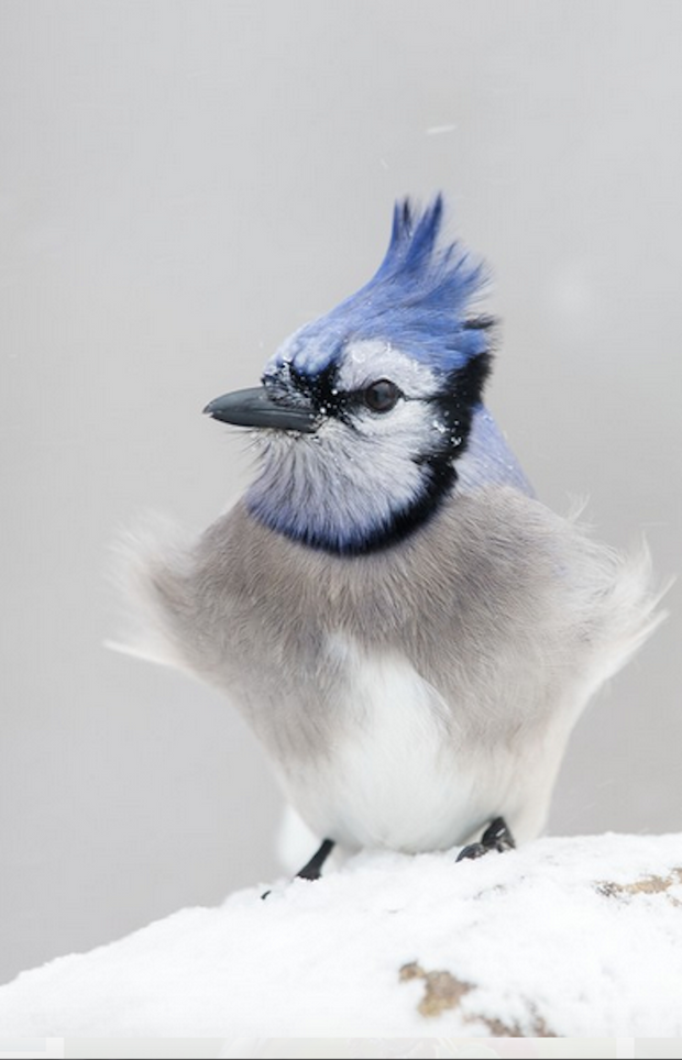 How to identify 20 winter backyard birds at your feeders ...