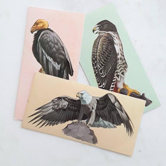 Vintage Vogel Karteikarten Greifvögel Kalifornien Kondor Weißkopfseeadler Red Tail Hawk PapierEphemera Junk Journaling Collaging SchrottPack  Etsy   Vintage Vo...