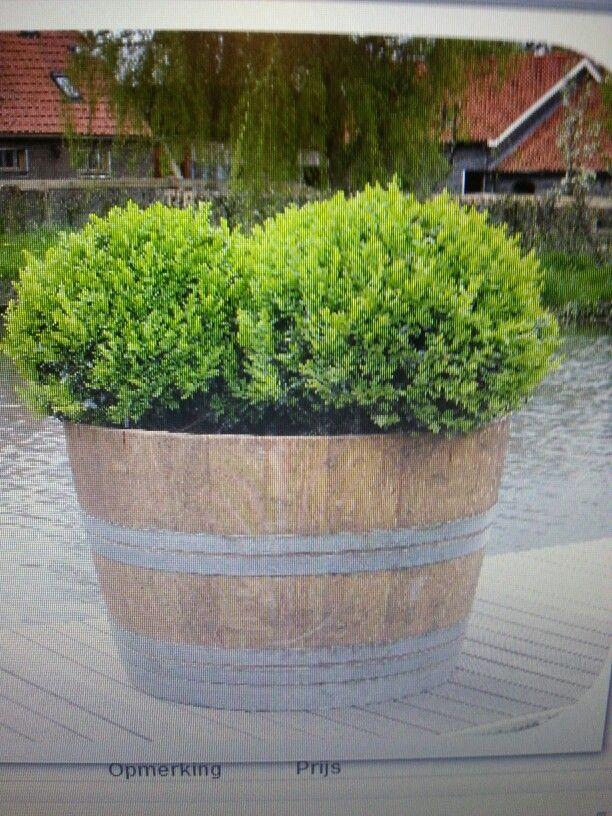 Buxus in wijnvat Garden Pinterest Gardens : c824baf413dd640216c3f1f760c88ca2 from www.pinterest.nz size 612 x 816 jpeg 172kB