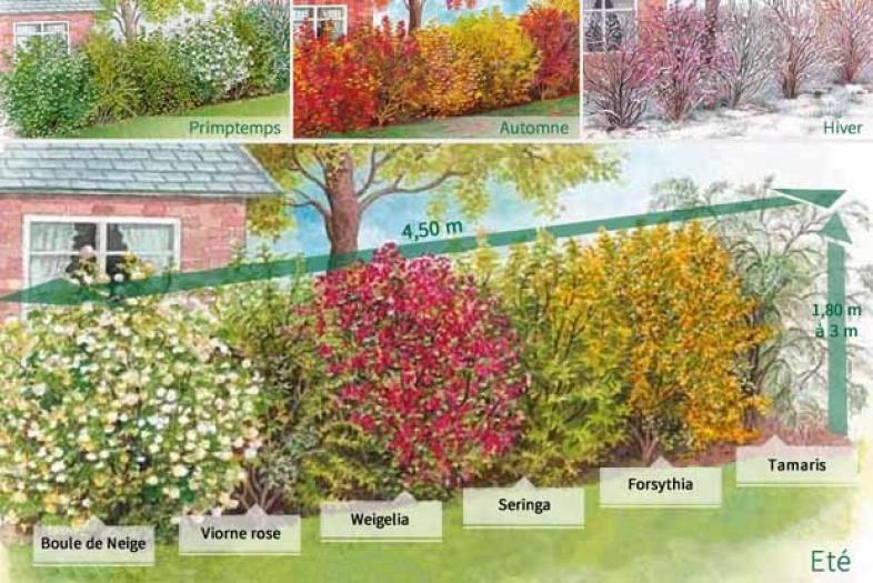 collection 39 la haie des quatre saisons 39 6 arbustes 2 3 branches jardin yard et landscape. Black Bedroom Furniture Sets. Home Design Ideas