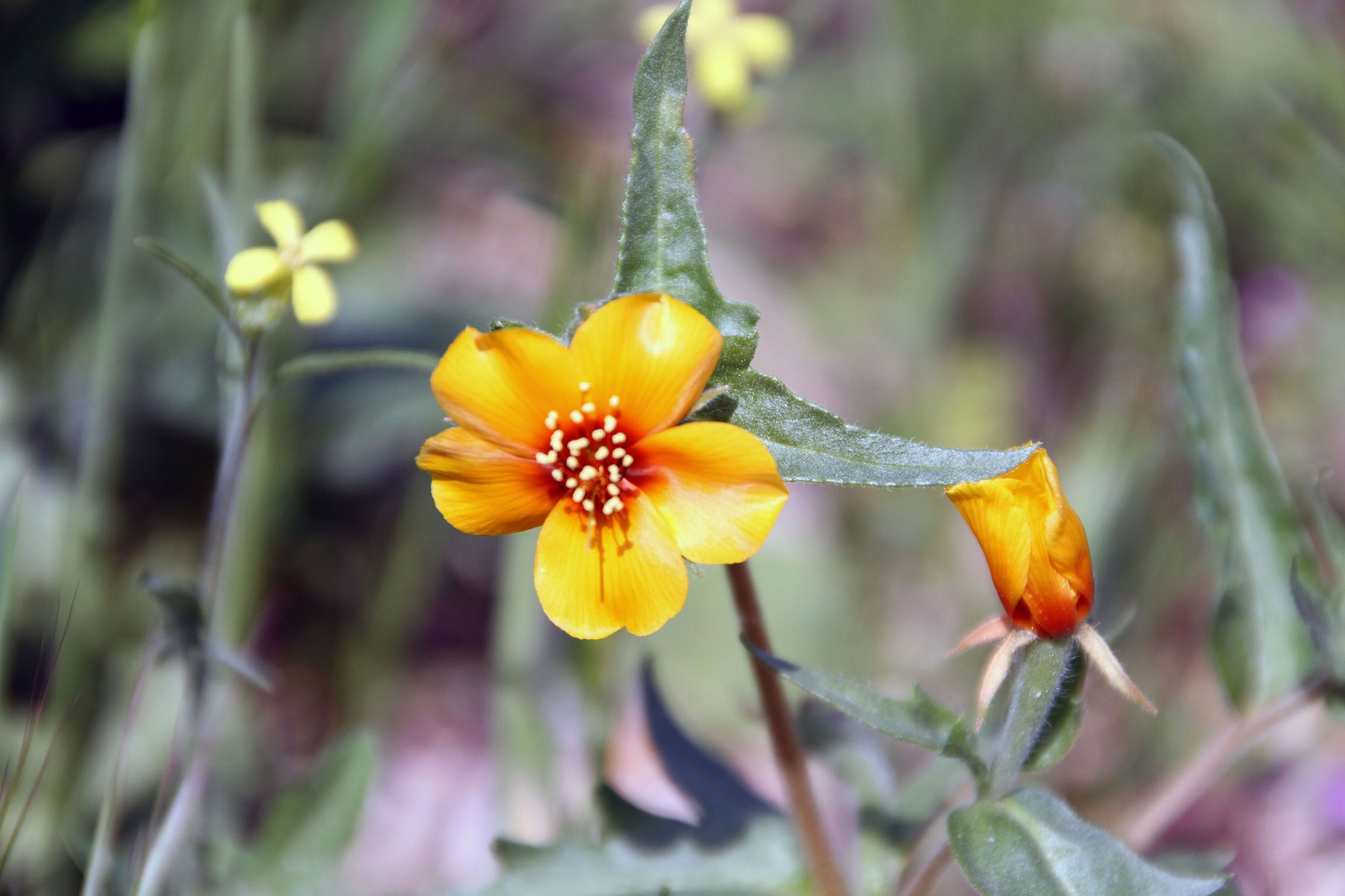 Wild Flowers Names Wild flowers, Trees to plant, Flower