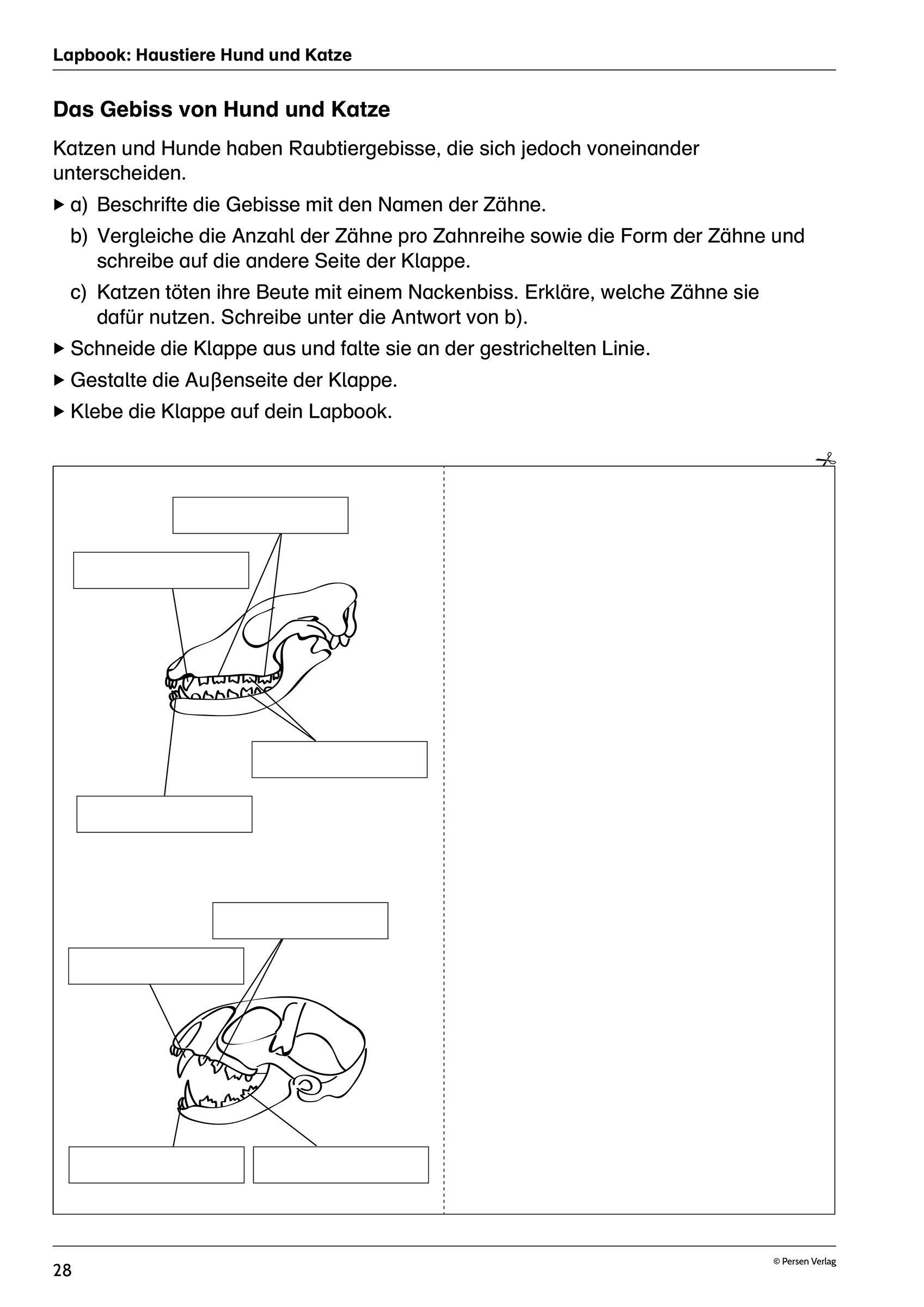 Lapbooks im Biologieunterricht   20./20. Klasse   Biologiestunden ...