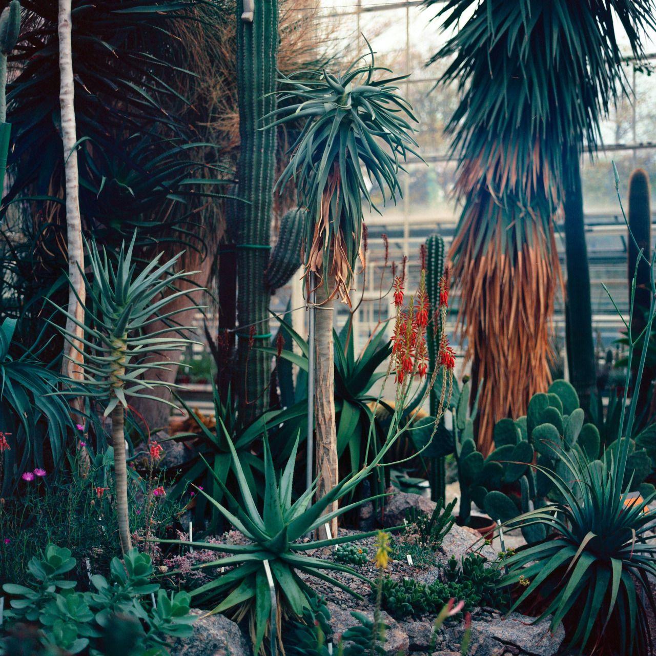 Botanischer Garten, Zürich, Nov '13 ©Maxim Leurentop