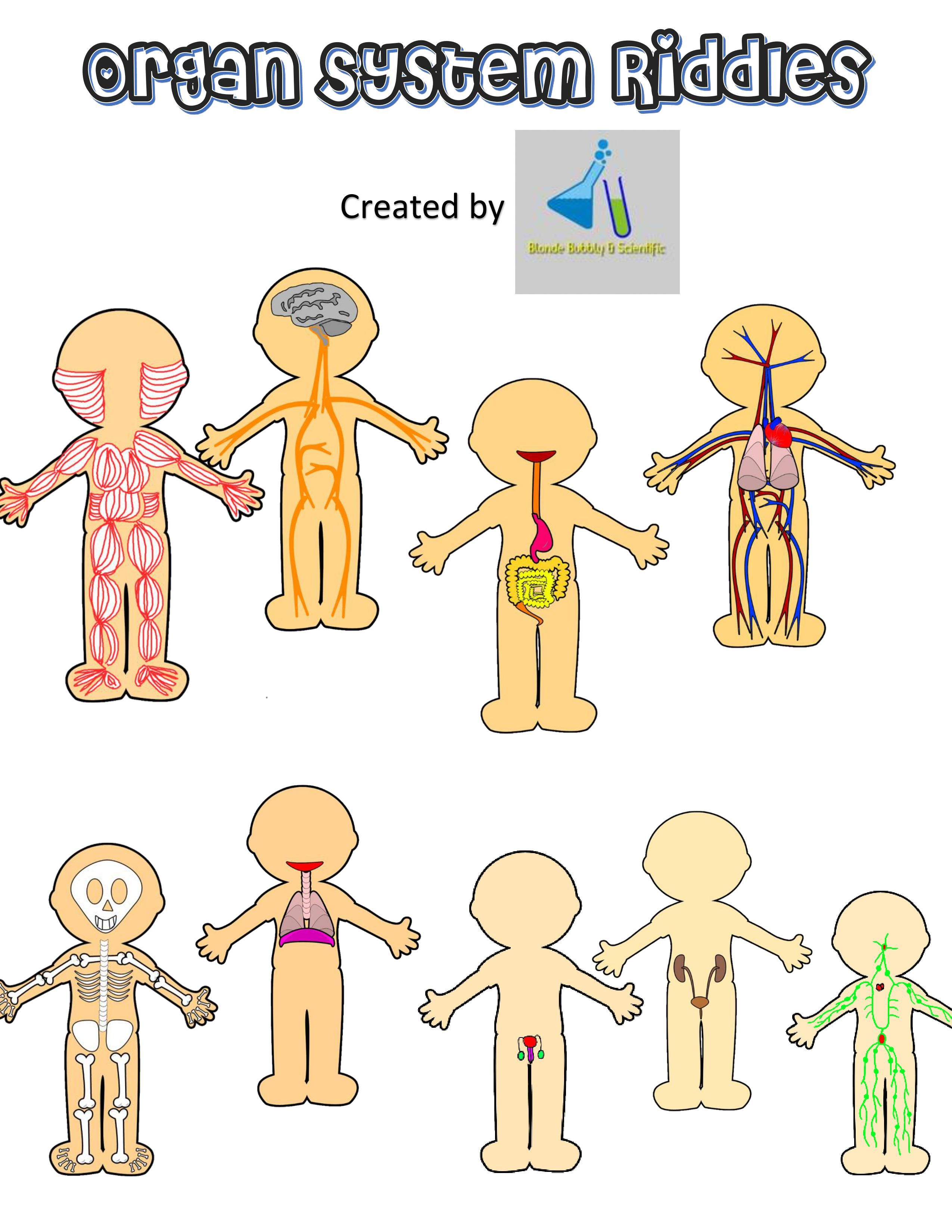 hight resolution of Human Body Systems Riddles   Human body systems