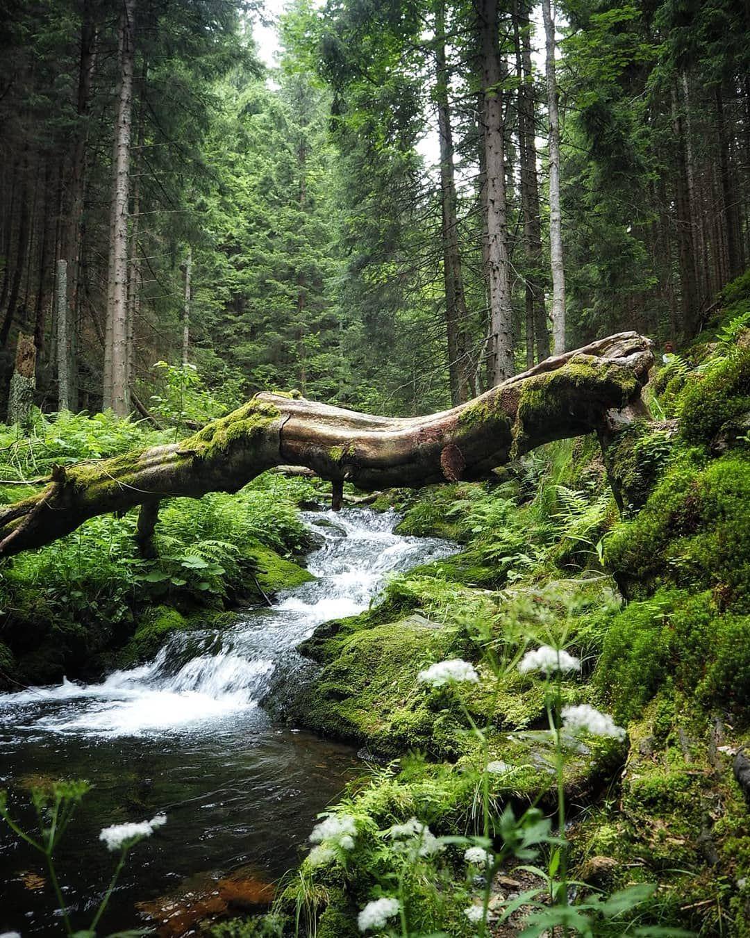 #greenworld#travelphotography#wildandfree#lostinthewoods#travelsoul👣🌍🌲#beautifulczechnature#lovelywondering#dnescestujem#vodopadybileopavy#cestujemczsk