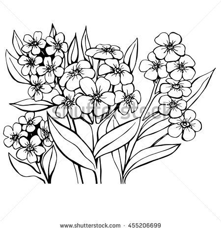 Forget Me Not Sketch Vector Illustration Design Element Artesanato